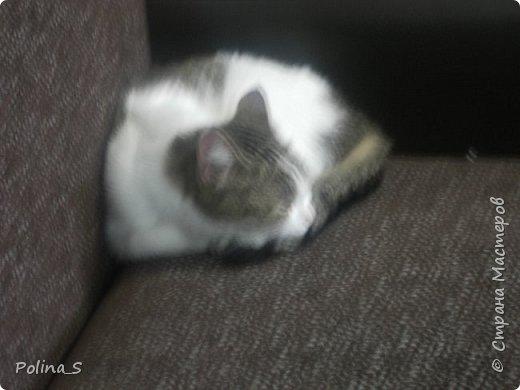 Моя кошка фото 5