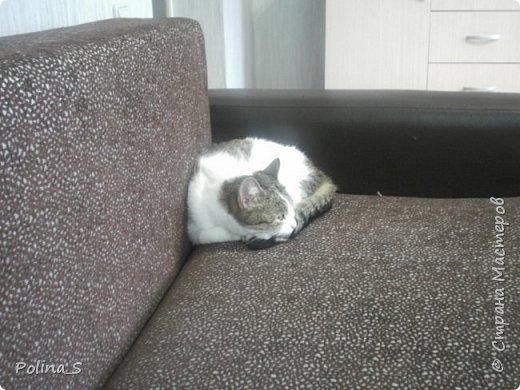 Моя кошка фото 6