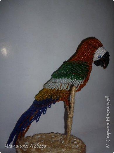 Попугай из бисера на каркасе фото 6