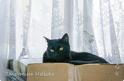 """Здравствуйте. Меня зовут Илья, мне 7 лет. У меня 3 кошки и 1 хомяк. Это моя кошка, её зовут Принцесса или Катана. Её подарили маме 5 лет назад. Она любит колбасу и её очень легко заставить """"хрюкать.""""                            кошка № 1 - 1 фото 2"""