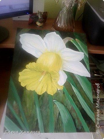 Тюльпан и нарцисс фото 4