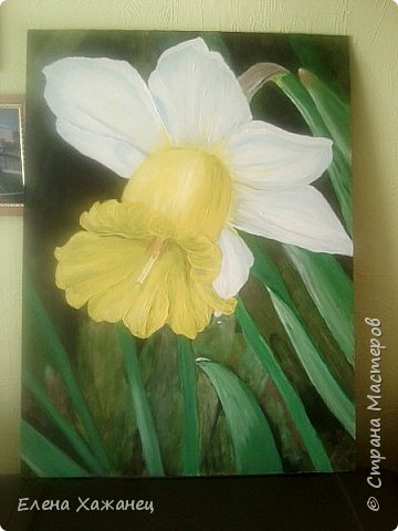Тюльпан и нарцисс фото 5