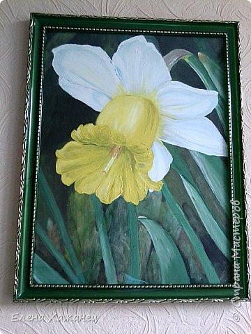 Тюльпан и нарцисс фото 2