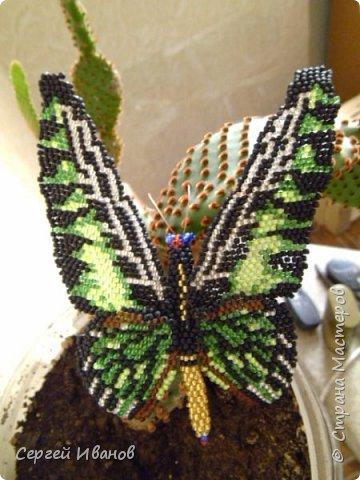 бабочка фото 1
