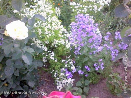 Здравствуйте жители Страны Мастеров!!!Сегодня я хочу показать вам свои цветы. фото 14