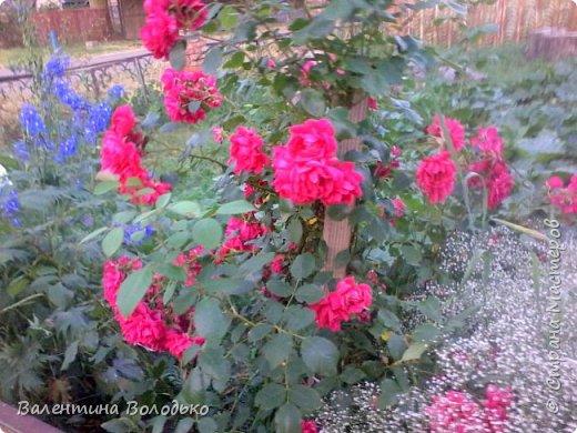 Здравствуйте жители Страны Мастеров!!!Сегодня я хочу показать вам свои цветы. фото 24