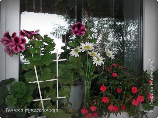Здравствуйте все жители и гости Страны! Лето пора цветения и ярких красок.  Хочу немного показать своих цветочков. Эти цветы растут у меня на балконе. Все живые, кроме ромашек (они у меня уже отцвели). Но я слепила немного ромашек из холодного фарфора. фото 2