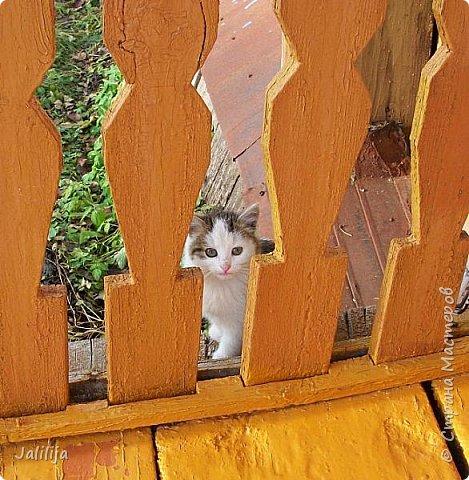 """Уважаемые жители и гости Страны Мастеров! Эта короткая запись - крик души. Каждое лето обязательно приносит  нам  проблемы с подкидышами - котятками, которых нам подбрасывают с завидным постоянством. В деревне все про всех всё знают.  Знают, что в этом доме живут люди, которые никогда не прогонят маленьких животных и как-то устроят их судьбу. И мы ежегодно  получаем такие неожиданные """"подарки"""". Если учесть, что у племянника страшная аллергия на кошачью шерсть и устроить куда-нибудь  иногда по 4-5 котят неизвестного происхождения требует времени, сил и достаточно тяжело -это превращается в большую проблему.  Я делаю эту запись не для того, чтобы сказать """"Не подбрасывайте к нам больше маленьких котят"""", вряд ли их подкидывают нам откуда-нибудь.  из Москвы. Люди, которые это делают тоже когда-то были детьми. Значит, в детстве что-то было упущено, если они идут на такое сейчас.  Это мы, взрослые, упустили.Я призываю всех учителей, всех, кто работает с детьми, мам, бабушек, дедушек -                          давайте будем почаще повторять детям, что каждый должен быть в ответе за тех, кого он приручает.  И не только словами, но и своими поступками. фото 1"""