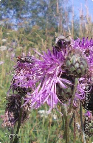Цветы и насекомые фото 10