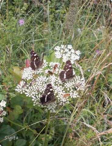 Цветы и насекомые фото 13