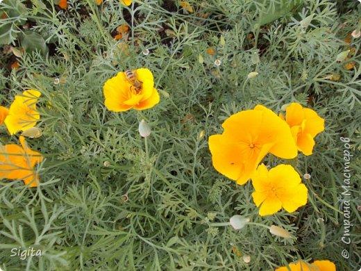 Цветы и насекомые фото 1