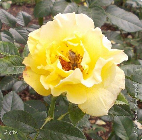 Цветы и насекомые фото 2