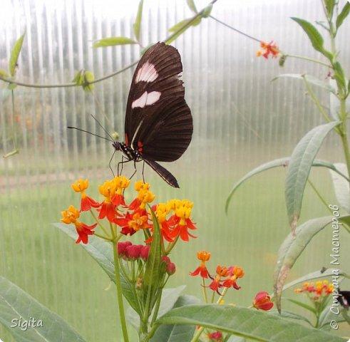 Цветы и насекомые фото 4