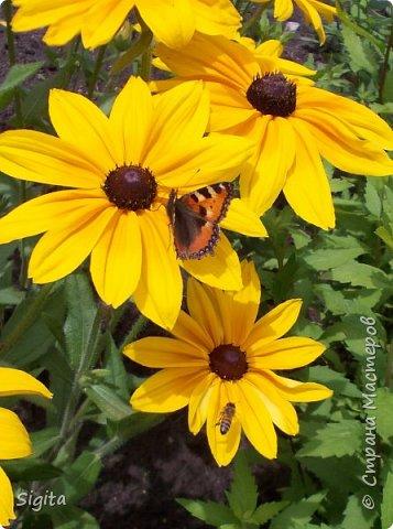 Цветы и насекомые фото 6