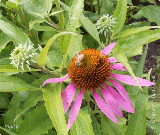 Цветы и насекомые фото 7