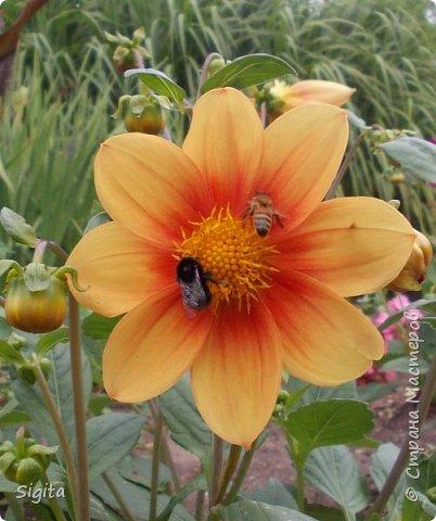 Цветы и насекомые фото 8