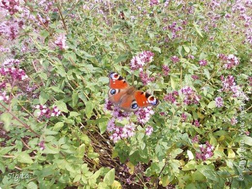 Цветы и насекомые фото 9