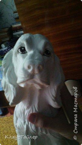 Эх кто бы собачку котлеткой угостил...((( фото 3