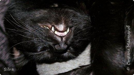 Доброго времени суток.Я к Вам со  своей живностью,правда не всей,пёс позировать отказался. :(  Знакомьтесь- это наши котики : старший-дворянин Иннокентий (он ближе) и  младший-британец Нафанаил,ну а если проще Кеша и Нафаня. фото 7