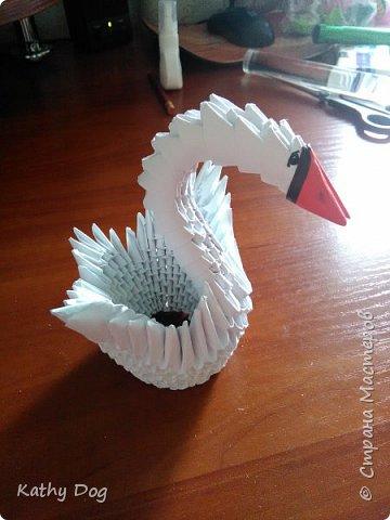 Мой лебедь  фото 5