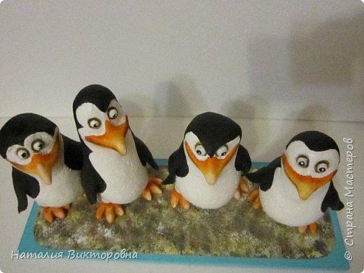Пингвины из Мадагаскара! фото 10