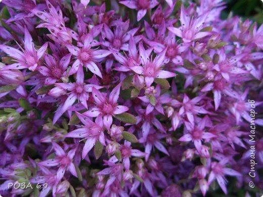 Очень люблю цветы. Не мыслю свою жизнь без них. Приглашаю любителей цветоводства полюбоваться на моих красавцев.В фавортах- лилия. Вот некоторые из них. Лилии разного срока цветения, поэтому долго радуют своим цветением и ароматом. фото 17