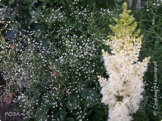Очень люблю цветы. Не мыслю свою жизнь без них. Приглашаю любителей цветоводства полюбоваться на моих красавцев.В фавортах- лилия. Вот некоторые из них. Лилии разного срока цветения, поэтому долго радуют своим цветением и ароматом. фото 10