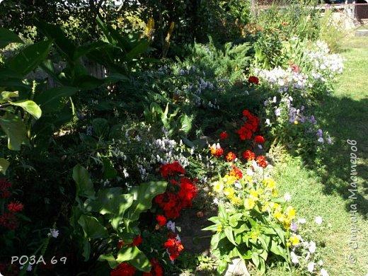 Очень люблю цветы. Не мыслю свою жизнь без них. Приглашаю любителей цветоводства полюбоваться на моих красавцев.В фавортах- лилия. Вот некоторые из них. Лилии разного срока цветения, поэтому долго радуют своим цветением и ароматом. фото 29