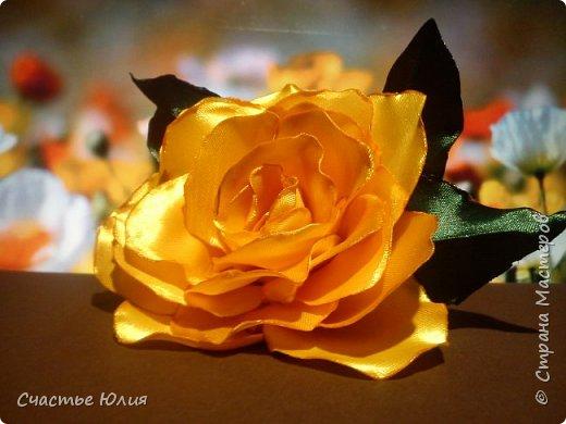 Цветок солнца фото 1