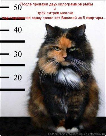 Так сложилось - в наш дом попали в разное время кошки одной масти - трёхцветные. фото 4