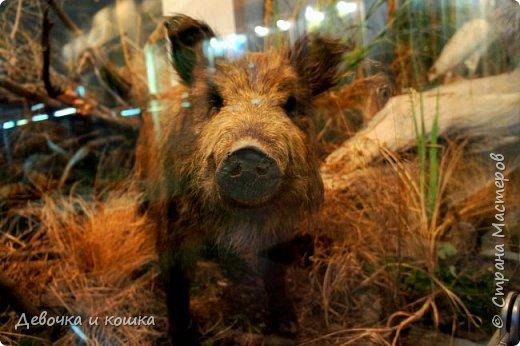 Всем привет! Сегодня путешествие по Волгограду продолжается. Мы были в Краеведческом музее. Там было классно!!! фото 5