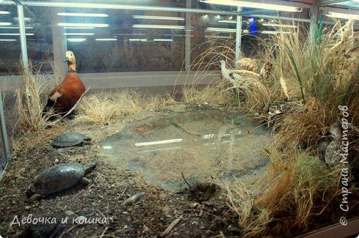 Всем привет! Сегодня путешествие по Волгограду продолжается. Мы были в Краеведческом музее. Там было классно!!! фото 7