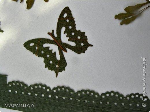 бабочки из листьев: яблони, кукурузы, винограда фото 14