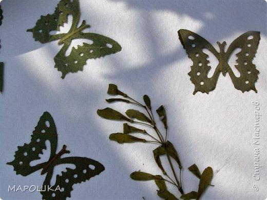 бабочки из листьев: яблони, кукурузы, винограда фото 1