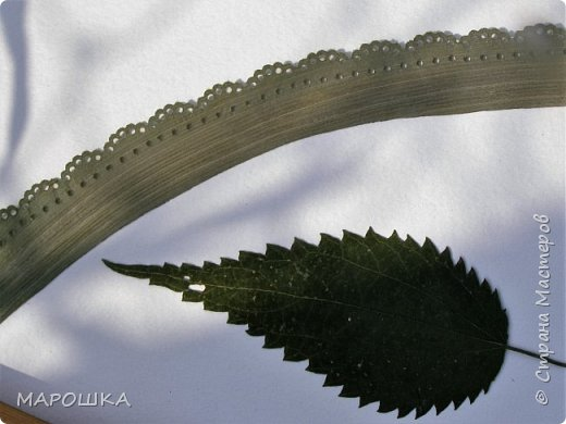 бабочки из листьев: яблони, кукурузы, винограда фото 6