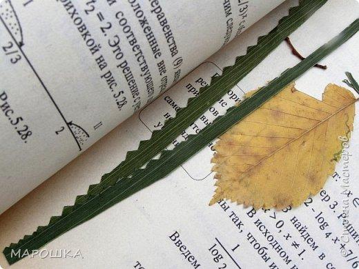 бабочки из листьев: яблони, кукурузы, винограда фото 21