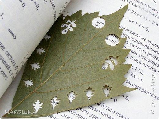бабочки из листьев: яблони, кукурузы, винограда фото 26