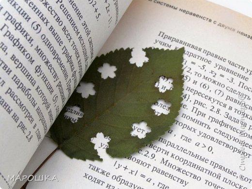 бабочки из листьев: яблони, кукурузы, винограда фото 27