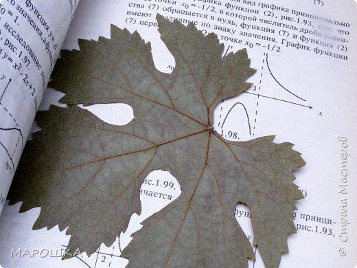 бабочки из листьев: яблони, кукурузы, винограда фото 3