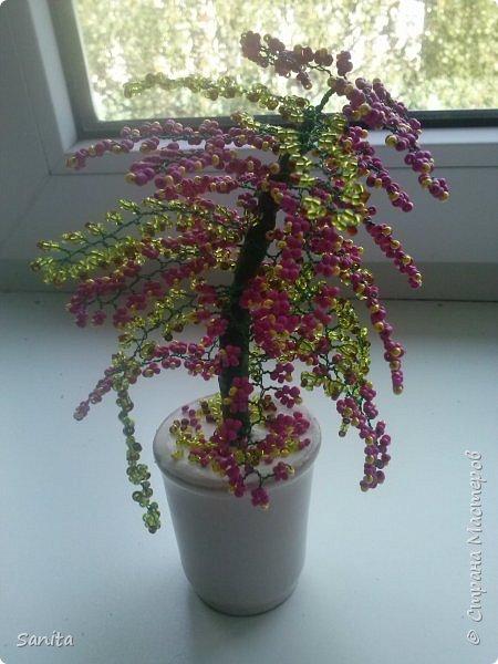 Цветущие деревья. фото 3