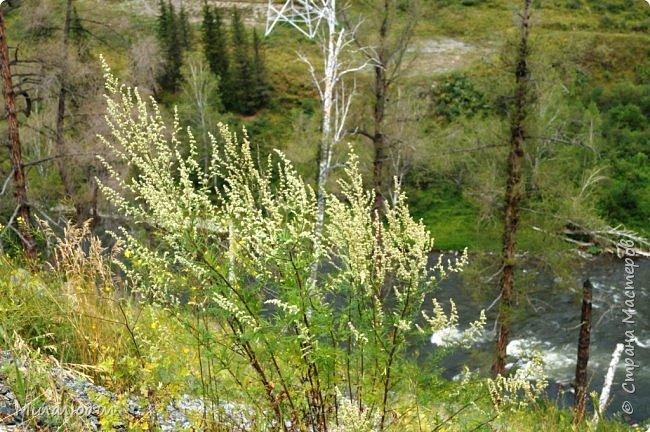 Всем здравствуйте! Приглашаю вас с собой в путешествие по Горному Алтаю. Зарядиться его мощной энергией и полюбоваться его красотами и величием. фото 24