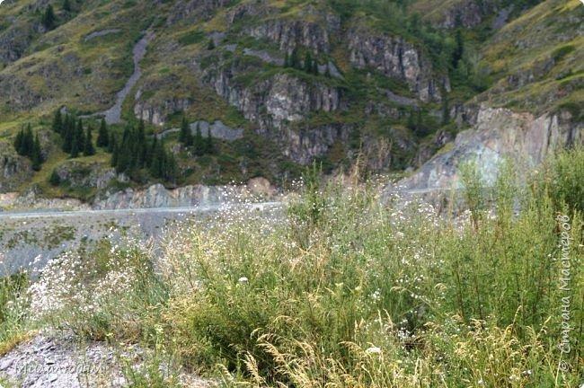 Всем здравствуйте! Приглашаю вас с собой в путешествие по Горному Алтаю. Зарядиться его мощной энергией и полюбоваться его красотами и величием. фото 35