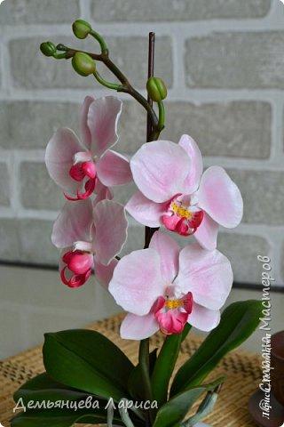 Орхидея - холодный фарфор фото 1