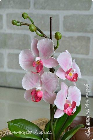 Орхидея - холодный фарфор фото 4
