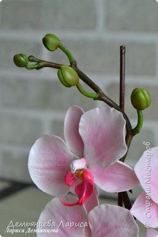 Орхидея - холодный фарфор фото 5