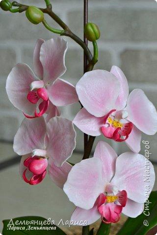 Орхидея - холодный фарфор фото 6