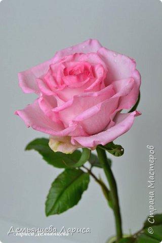 Розовая роза из полимерной глины  фото 2