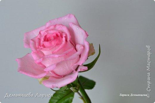 Розовая роза из полимерной глины  фото 5