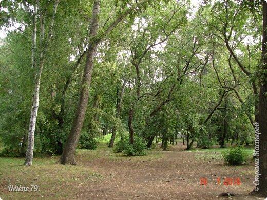 Добрый день, дорогие жители СМ! Приглашаю ВАС продолжить нашу прогулку по старому уютному саду. фото 3