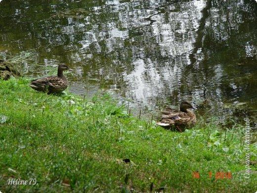 Добрый день, дорогие жители СМ! Приглашаю ВАС продолжить нашу прогулку по старому уютному саду. фото 1